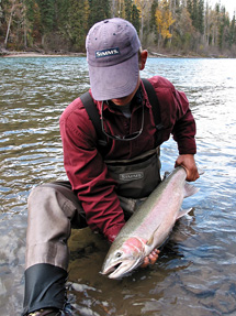 A beautiful wild Bulkley River Steelhead :: photo by Richard Mayer © 2003