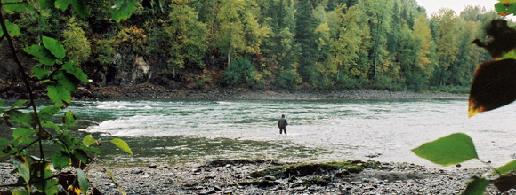 Exploring the Bulkley River for Wild Steelhead :: Maxwell Steelhead Guides