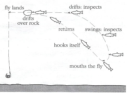 Typical Movement of Motivated Fish