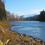 Bulkley River :: Maxwell Steelhead Guides